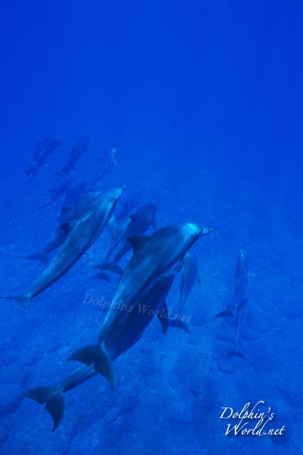 ハンドウイルカの画像 p1_34